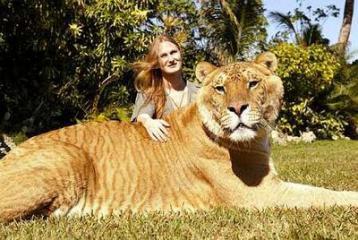 liger01.jpg