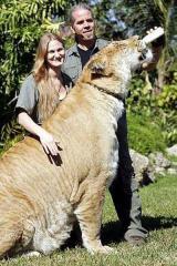 liger02.jpg