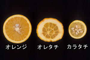 oretati_orange_karatati.jpg