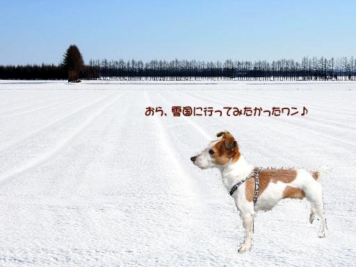 雪原のコピー