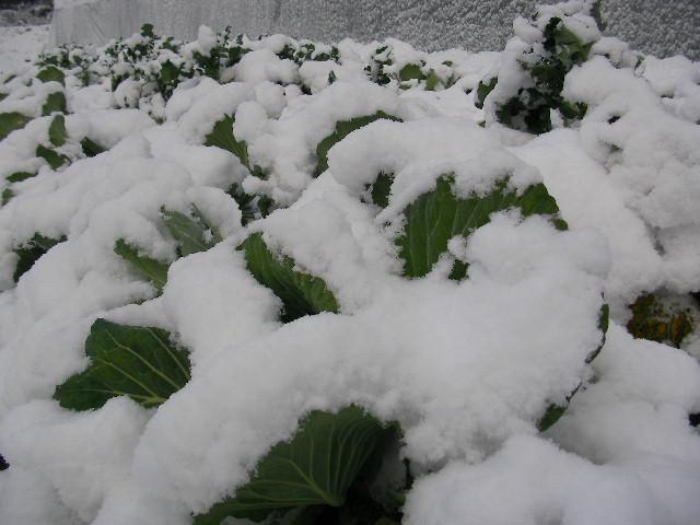 12月25日雪 (5)