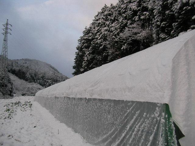12月25日雪 (2)