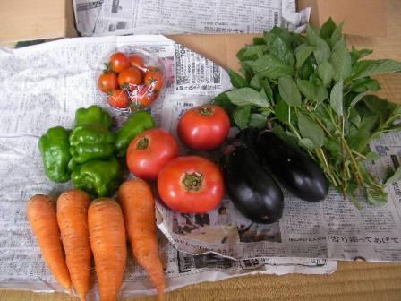 夏野菜 (4)ブログ