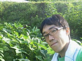 自然栽培オクラ