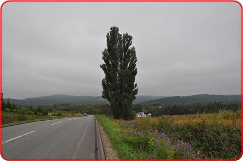 2012-12-10-16.jpg
