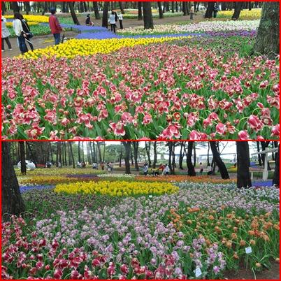 2012-5-13-24.jpg