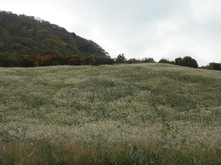 鷹巣原高原