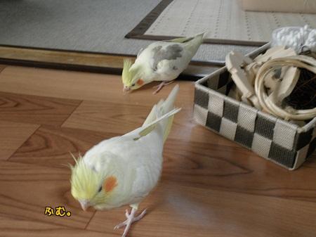 各々遊ぶ2羽