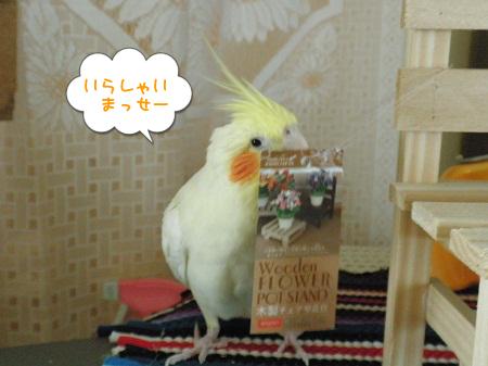 店鳥(長)さん?