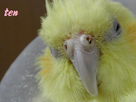 鼻からヒョロッと羽