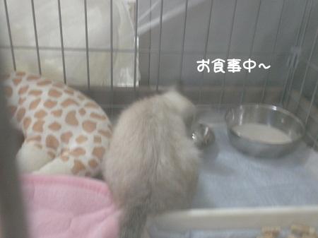 ミミちゃんお食事中~