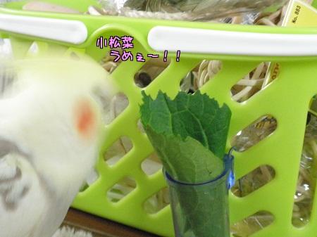 小松菜ラヴ