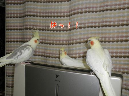 気付く3羽
