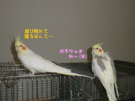 お子ちゃまね(*^m^*)