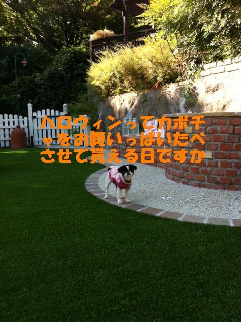 お庭わん1