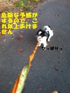 ___20111020120127.jpg