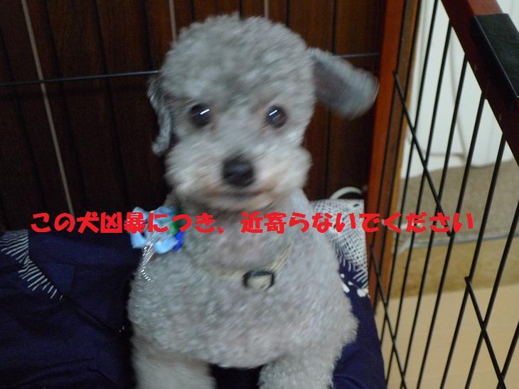 muku_20120504213004.jpg
