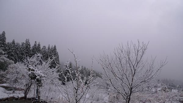 111219降雪