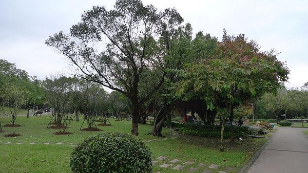 111231大安森林公園04