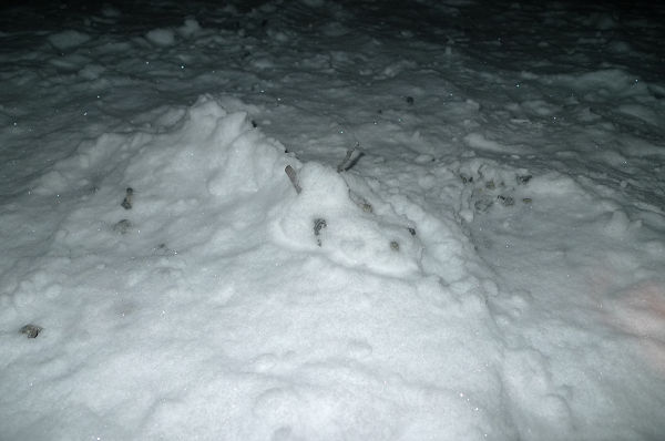 120202雪竜