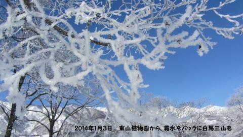 東山植物園近くから霧氷をバックに見る白馬三山 (480x270)