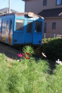 コスモス咲く海鹿島駅