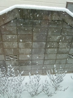 2014年12月雪積もる