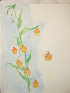 花のスケッチ~水彩画