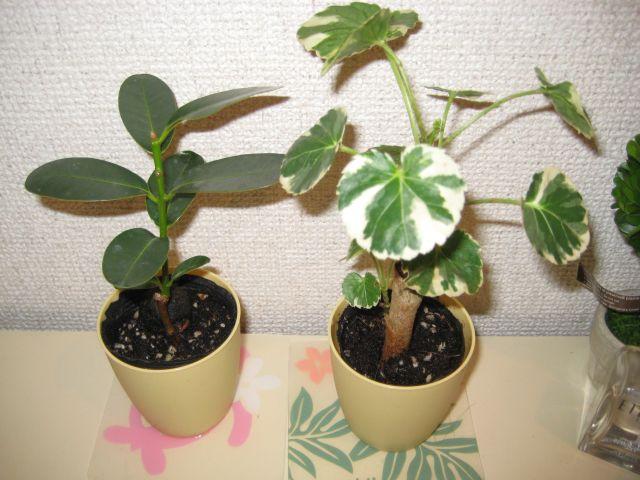 tree001.jpg