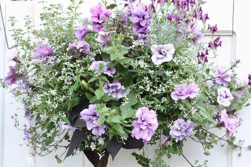 T's Garden Healing Flowers‐P・サマーパープルのハンギング
