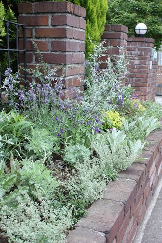 T's Garden Healing Flowers‐初夏の花壇
