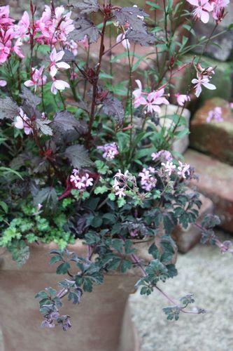 T's Garden Healing Flowers‐ビンセント鉢とピンク系寄せ植え