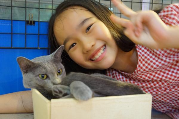 korat cat momo9