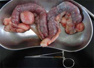 犬の嚢胞性子宮内膜過形成1