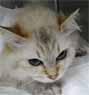 ネコの子宮蓄膿症1