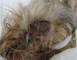 犬の歯槽膿漏3