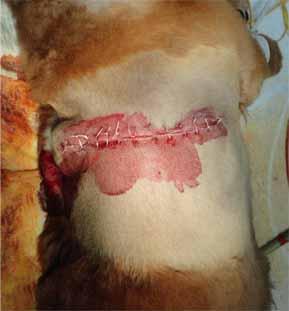 犬の毛包由来の腫瘍4