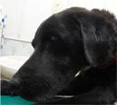 犬の扁平上皮ガン1