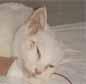 急激な骨髄抑制を起こした猫白血病1