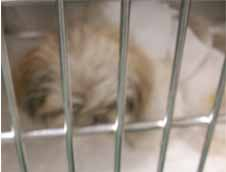 イヌの子宮粘液腫1