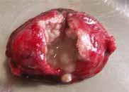 イヌの皮膚腫瘍切除4