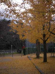 鷲羽山 瀬戸大橋の紅葉4
