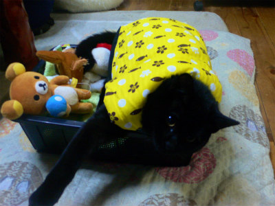 猫写真 021