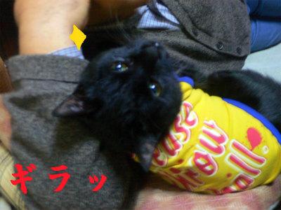 猫写真 011