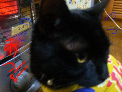 猫写真 008