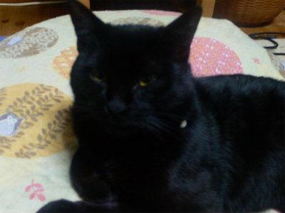猫写真 006