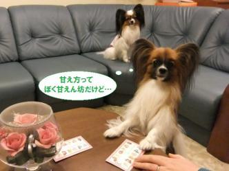 01-09_20120105080713.jpg