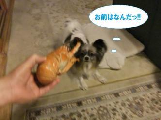 01-15_20120105080634.jpg