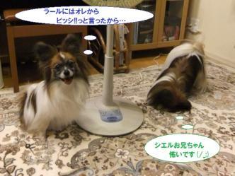 03-03_20111104072425.jpg
