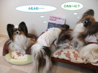 05-02_20120206112246.jpg